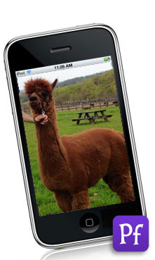 Check out my alpaca