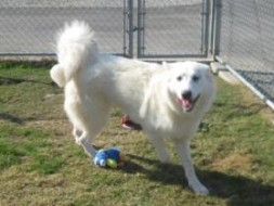 Glacier is available for adoption in Devore, CA