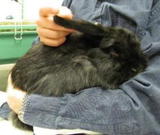 Storm the Bunny is available at Burlington County Animal Alliance