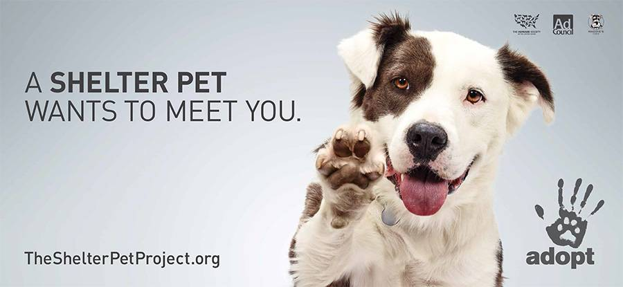 Adopt A Dog Online For Free
