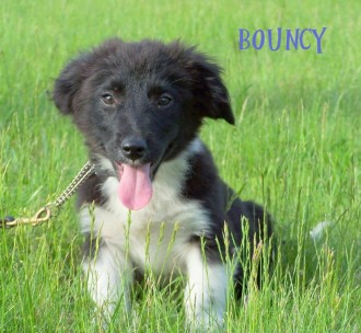 Bouncy from NJ Puppy Rescue