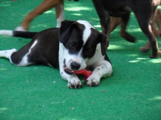MJ, available from S&L Rescue