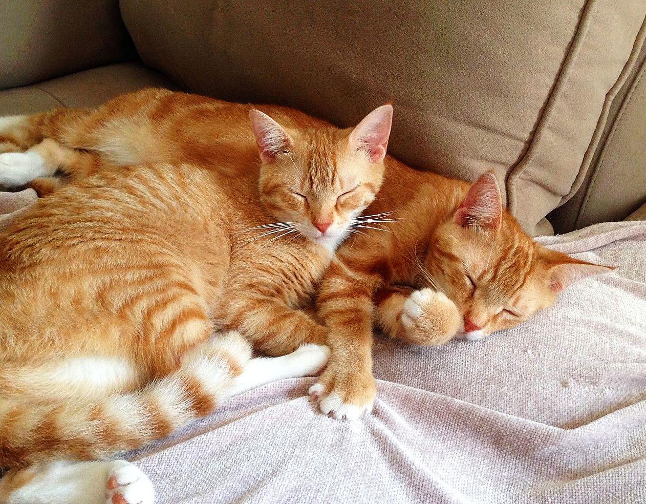 Inactive Kittens
