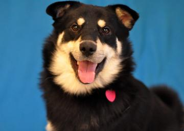 advanced photography tips adoptable pets for dogs