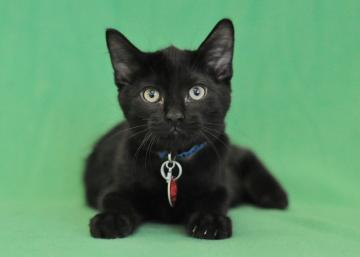 advanced photography tips adoptable pets for cats