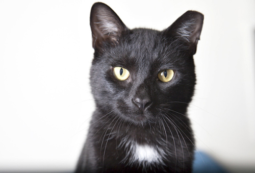 advanced photography tips adoptable pets black fur pets