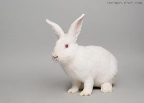 advanced photography tips adoptable pets white fur pets