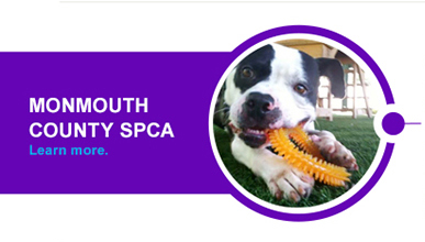 Adoption Options In Action Grants SPCA enrichment grant