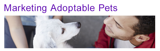 Marketing adoptable pets for animal shelters and rescues