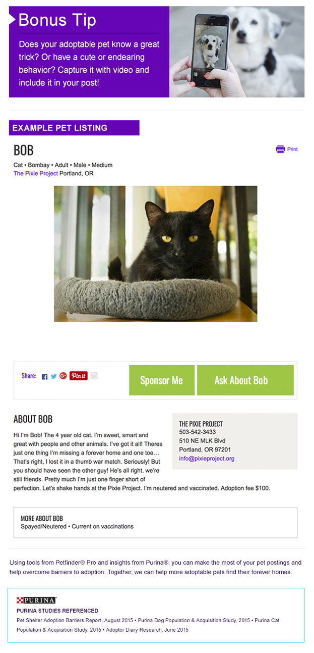 Marketing adoptable pets for animal shelters and rescues  use video to promote