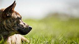 Petfinder shelter rescue group member account login February newsletter