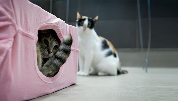 Shelter Cat Enrichment
