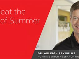 3 Tips to beat the summer Dr. Reynolds