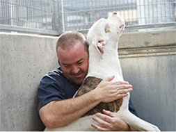 5 Ways to Prevent Animal Welfare Compassion Fatigue Online Library