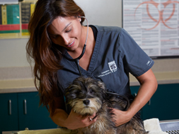 5 Tips to Ensure Effective Pet Vaccination 235 190