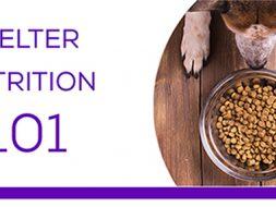 Shelter Nutrition 101