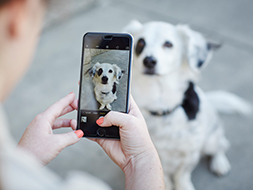 5 Tips & Techniques for Eye-Catching Pet Photos Online Learning Center
