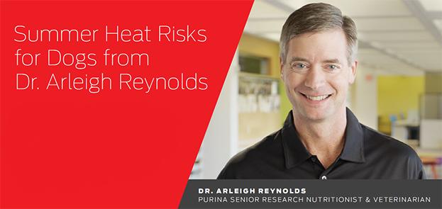 Summer Heat Risk Dr Reynolds