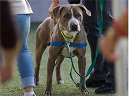 5 Tips for Successfully Engaging Animal Rescue Volunteers Online Learning Center