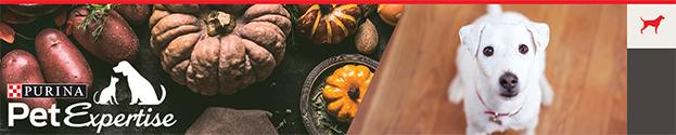 Fall Ingredient Safety header