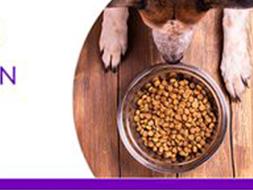 Dog looking at his food bowl
