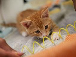 Animal Enrichment Tips