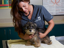 Dog Being examined by veterinarian vaccination tips