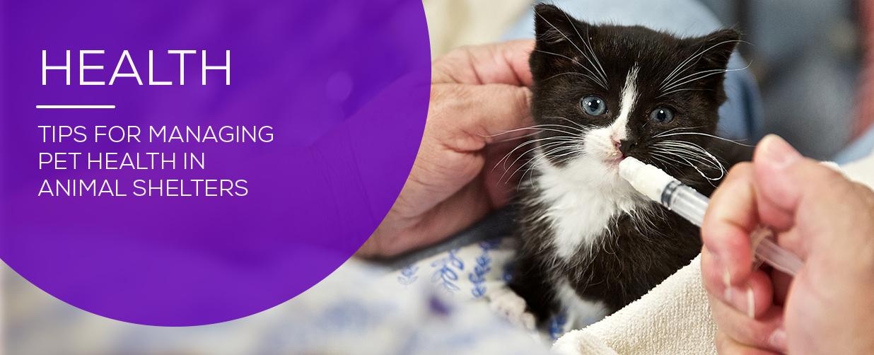 Adoptable Kitten Receiving Care