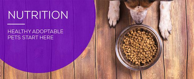 Animal shelter nutrition