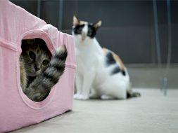 Shelter Cat Enrichment Video