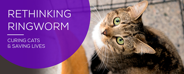 Managing Ringworm in Shelter Cats