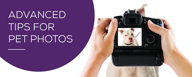 Advanced Photography Tips