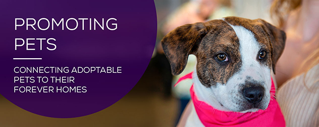 Promoting Pets for Shelters and Rescue Groups