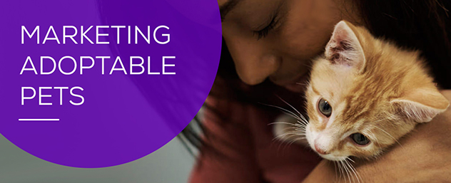 Marketing Adoptable Pets