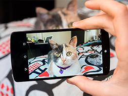 Pet Profile Videos