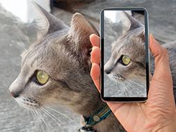 Basic Pet Photography