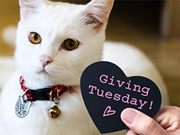 Prepare for Giving Tuesday